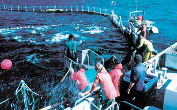Image: tuna farm