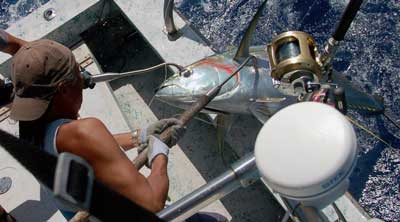 image: tuna fishing